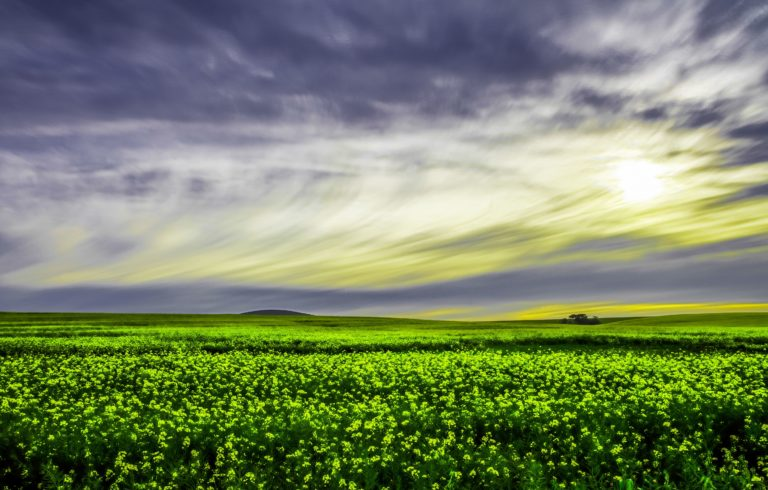 Green Economy, tutto quello che c'è da sapere